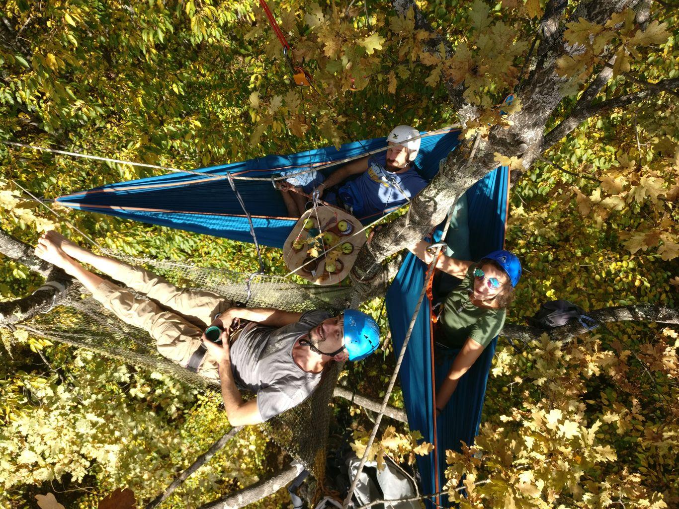 Команда TreeWalkers, BCC-2020, Россия