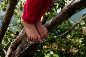 free-tree